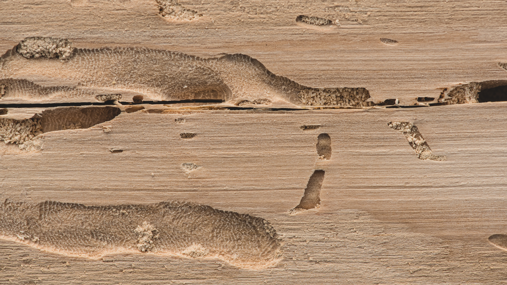 Сушка деревянной тары